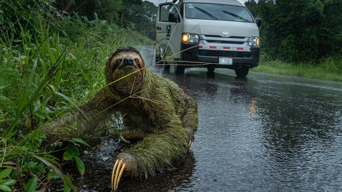 Why Did the Sloth Cross the Road? To Pose For This Year's 'Capturing Ecology' Photo Contest