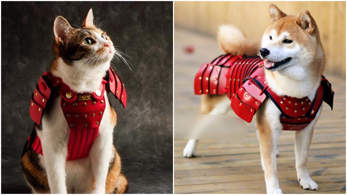 Japan Creates Samurai Armor For Cats And Dogs