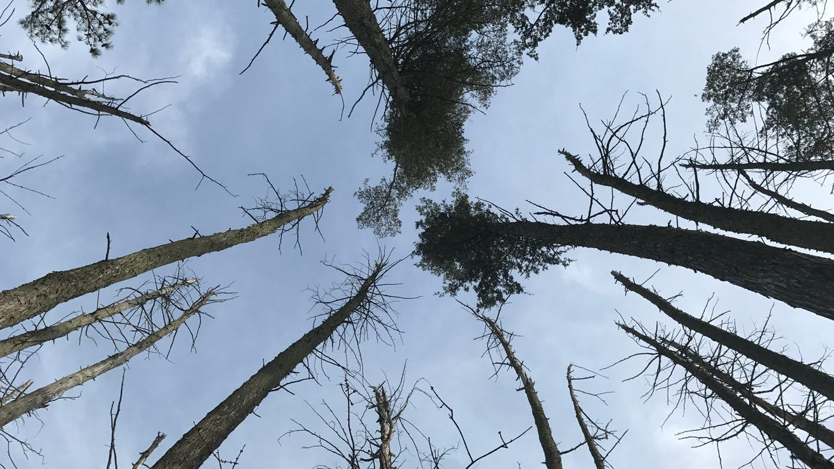 The Spooky Rise of 'Ghost Forests' Along the Eastern Seaboard