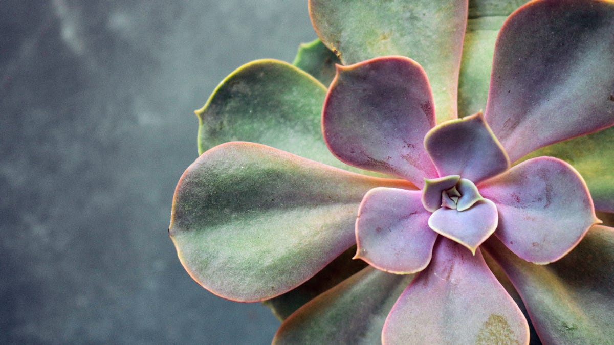 How to Save Money on Plants by Stealing Cuttings