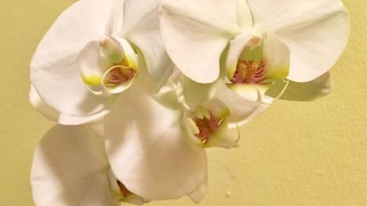How to Keep a Trader Joe's Orchid Alive—or Get It to Bloom Again