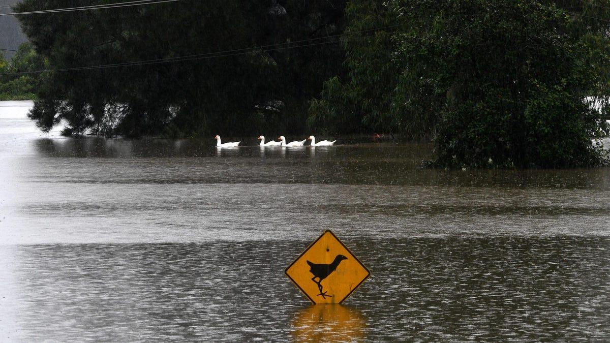 The Australian Floods Are Devastating Wildlife