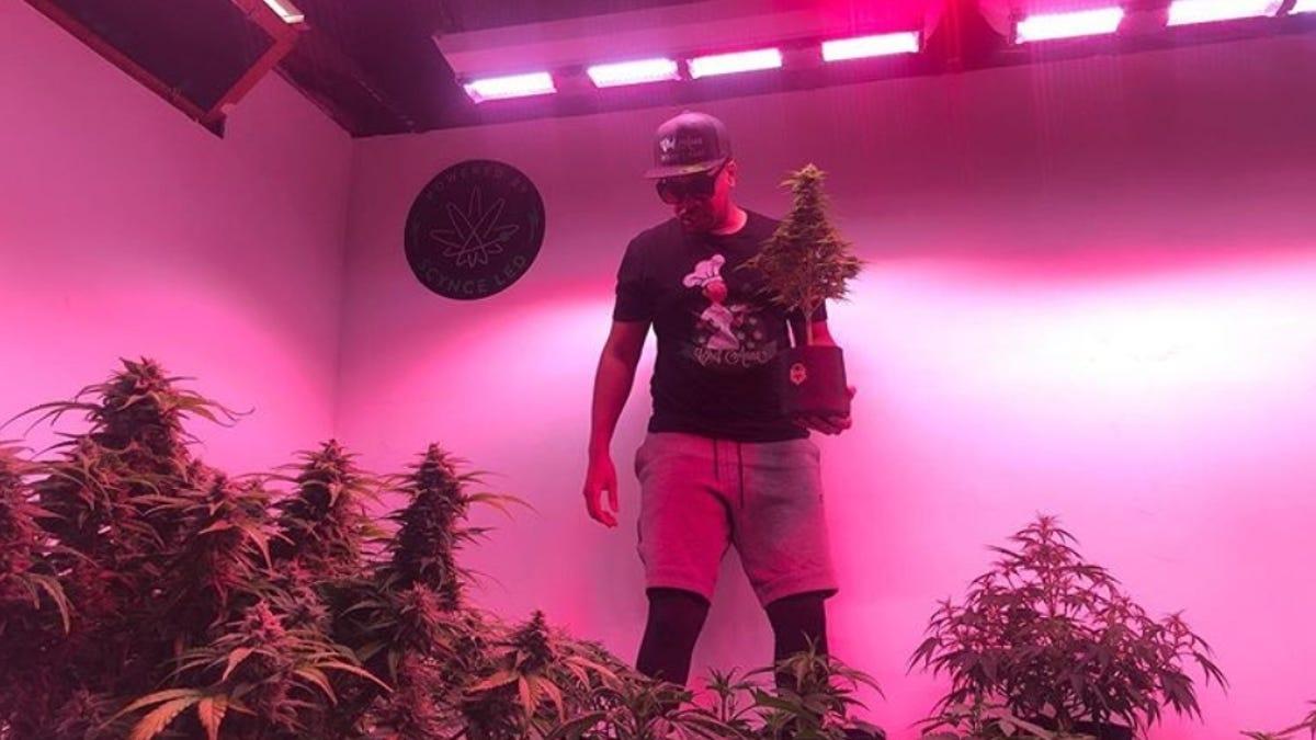 Thousands Of People Enjoy Just Watching Marijuana Plants Grow On Twitch