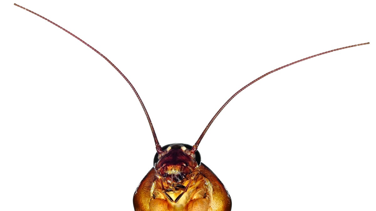 How to Get Rid of Cockroaches Without Hiring a Professional