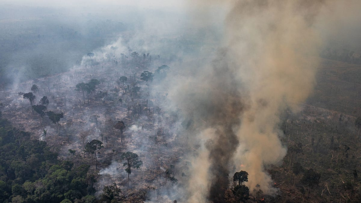 How China Is Helping Drive Deforestation in Brazil and Indonesia