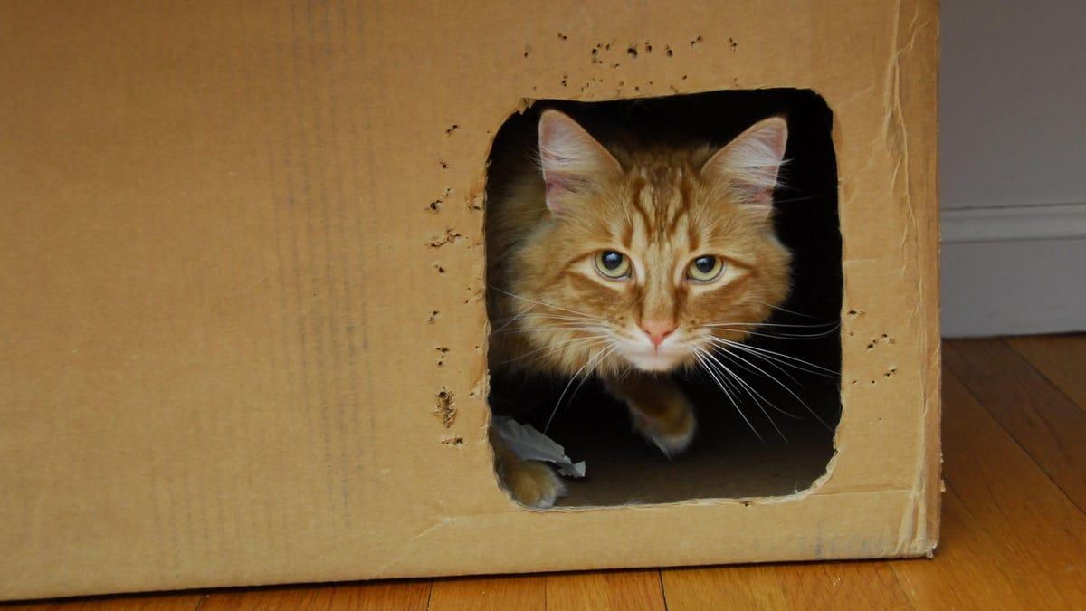 Scientists Save Schrödinger's Cat