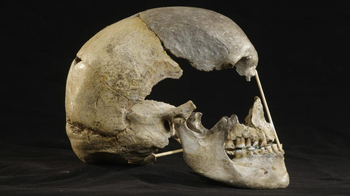 Skull From Czech Cave May Contain Oldest Modern Human Genome