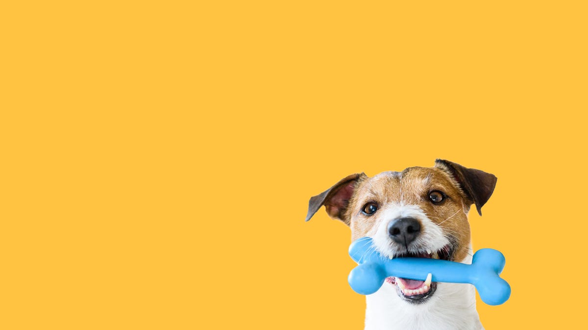 Should You Really Only Buy Blue Dog Toys?