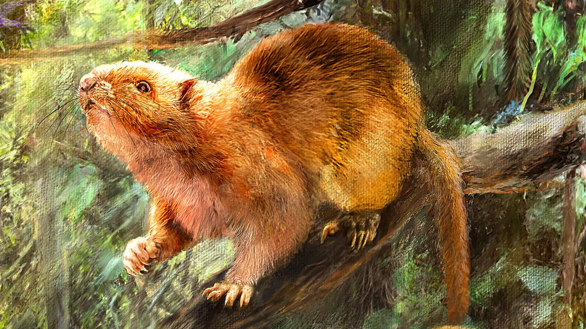 Bones of Extinct Giant Cloud Rats Found in Philippine Cave thumbnail