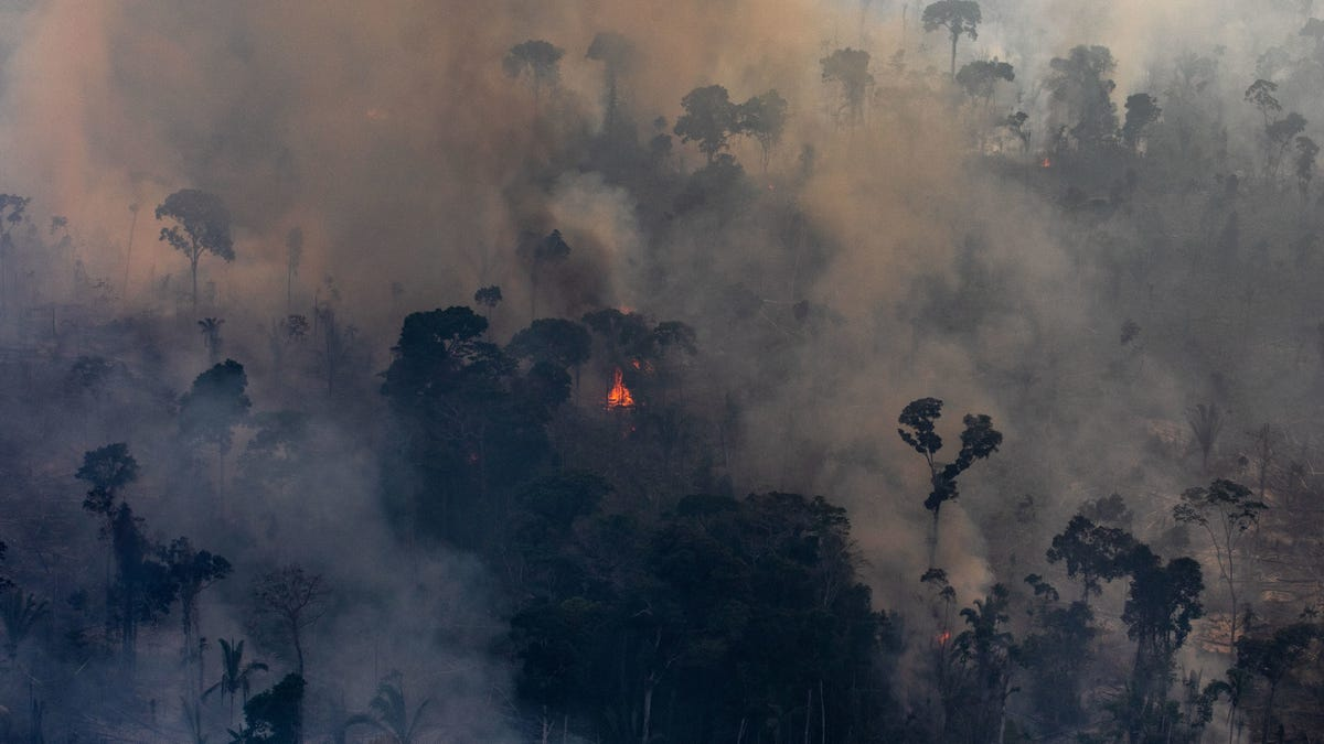 The Amazon Is Fucked Under Brazil's President, New Data Confirms