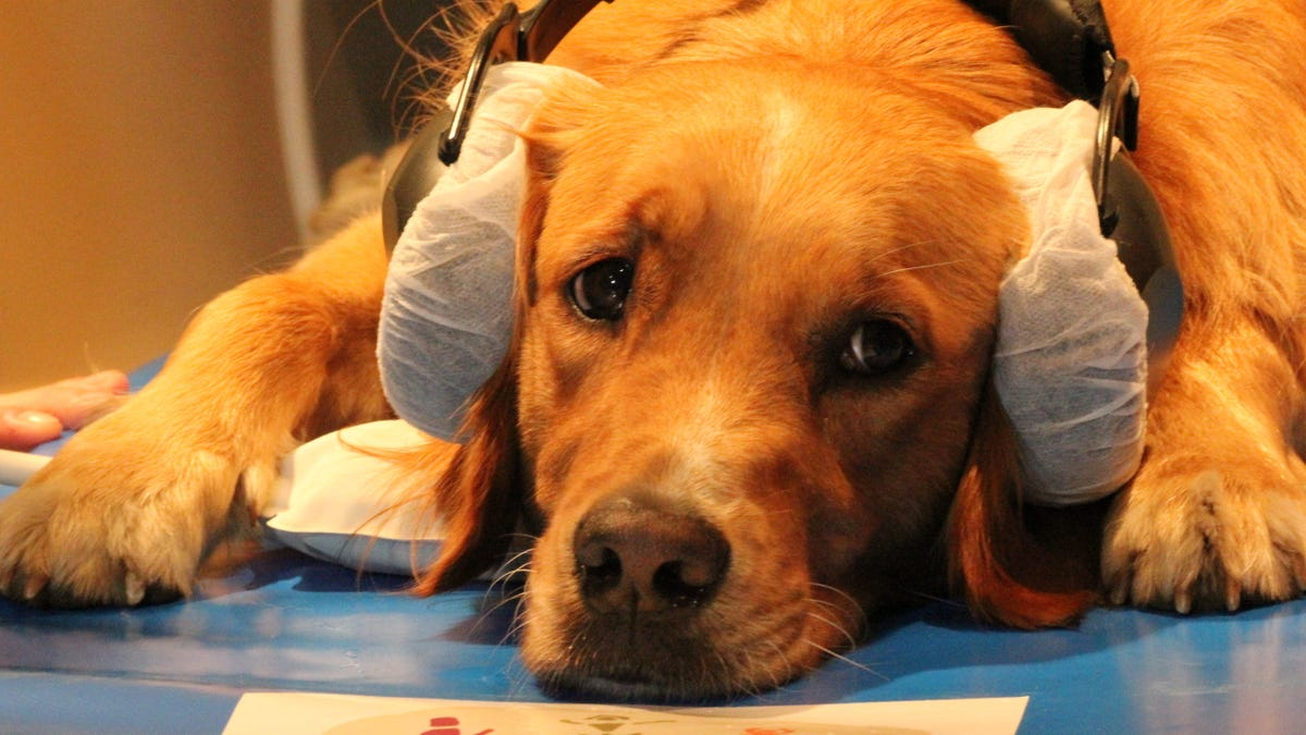 Your Dog's Ice-Cold Nose May Be a Sensor for Detecting Heat at Distance