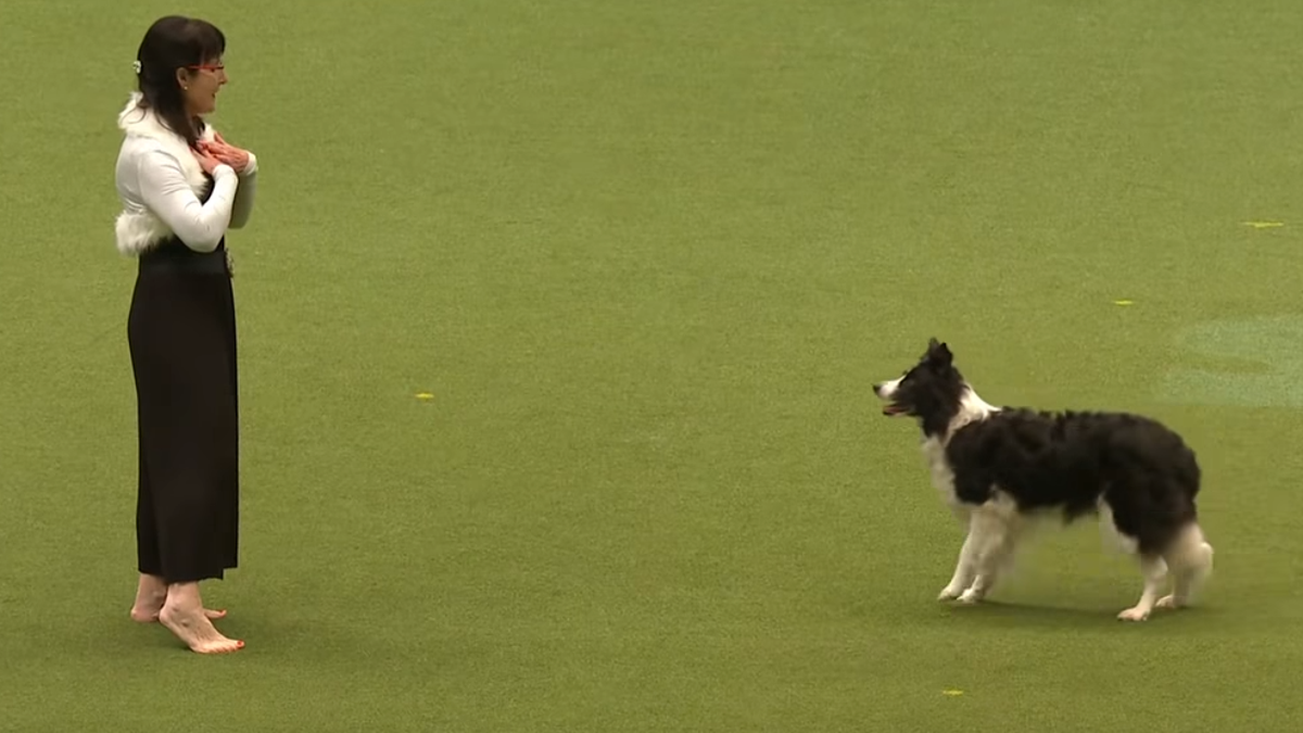 It's time to watch a dog show's Evanescence dance routine