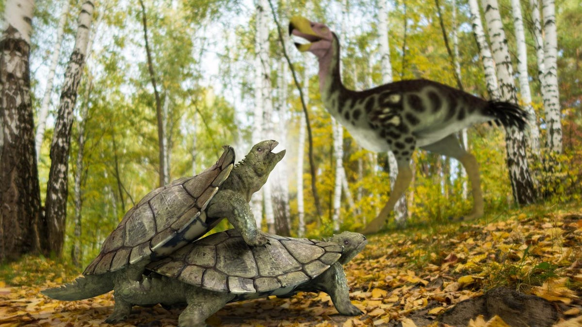 'Bizarre' Land Turtle Somehow Survived Mass Extinction That Killed the Dinosaurs