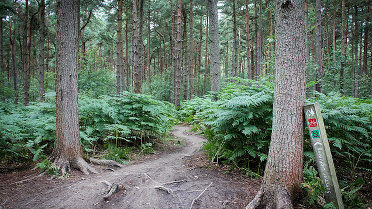 Why You Should Fall In Love With Trail Running This Spring