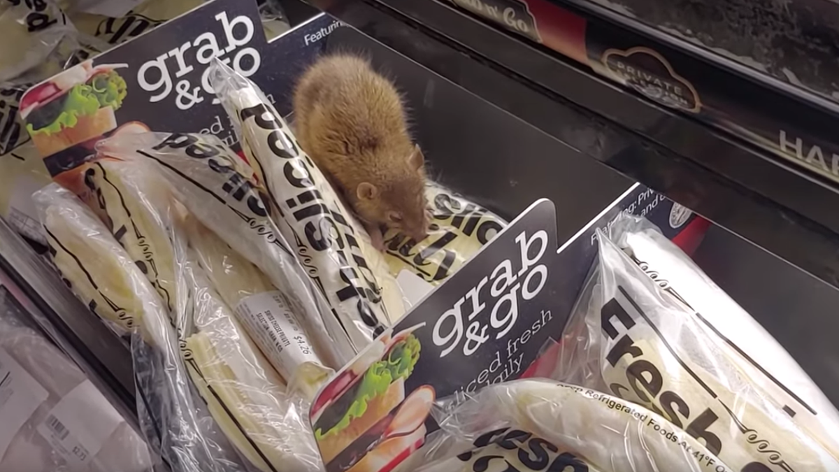 Mouse caught eating cheese in Chicago-area grocery store, lives up to stereotypes