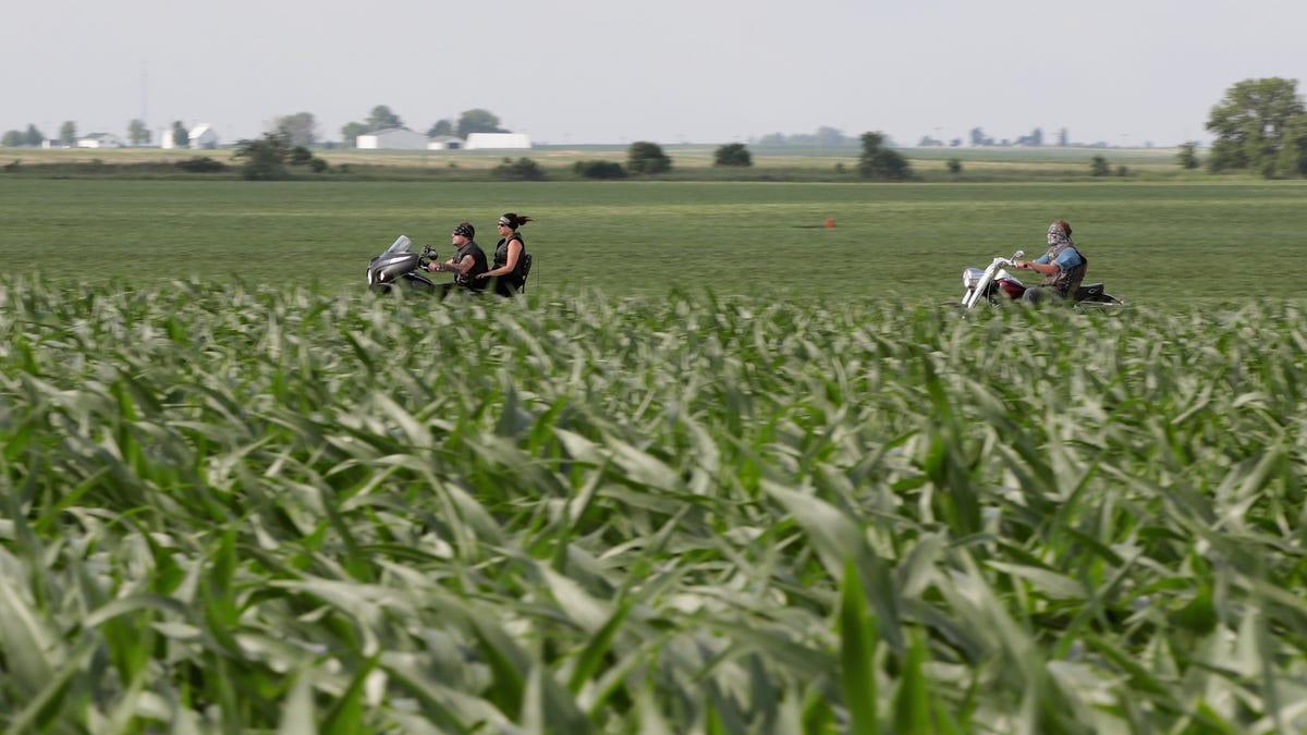 Corn Is A Menace On Rural Roadways