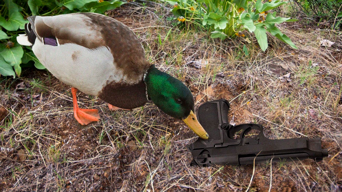 Gun Control Fail: This Duck Found A Gun In A Bush And Is Now Pushing It Around The Park With Its Beak