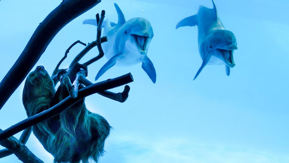 La expresión de estos dos delfines al ver por primera vez a un perezoso es lo que necesitas para alegrarte el día