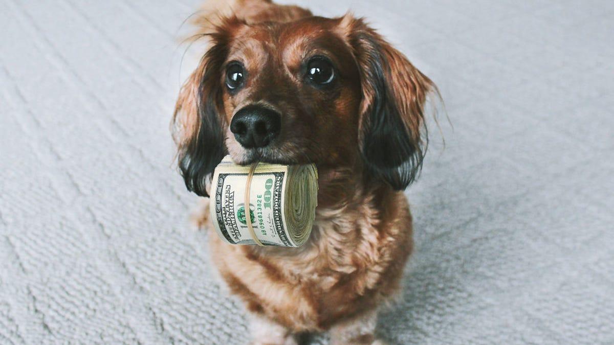 La verdadera razón por la que tu perro te mira a todas horas