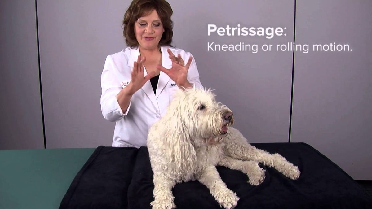 Why You Should Start Massaging Your Dog
