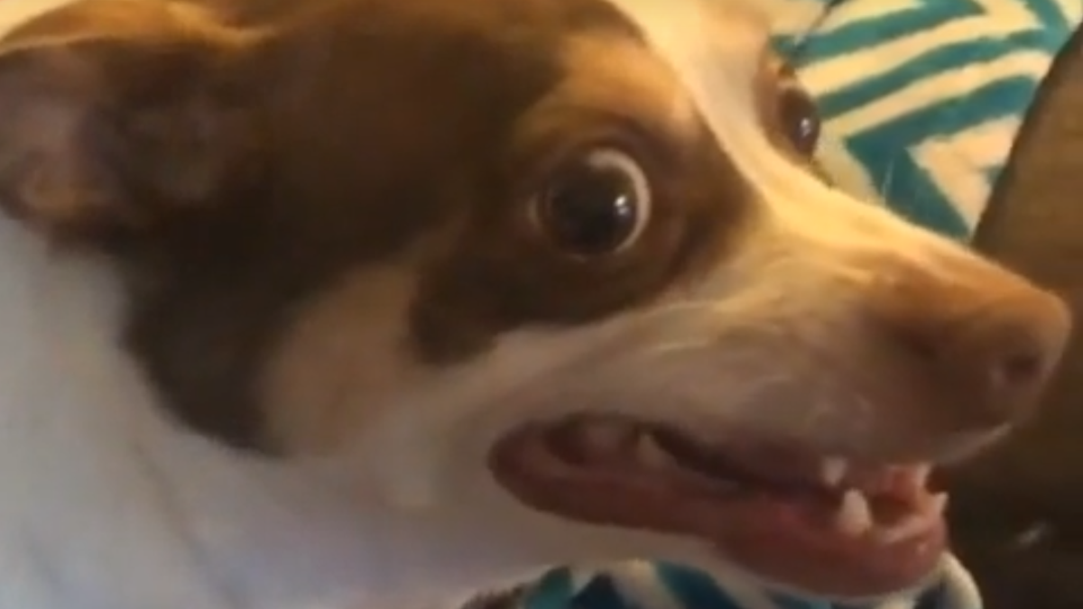 An interview with Mister Bubz, the angriest dog on the internet