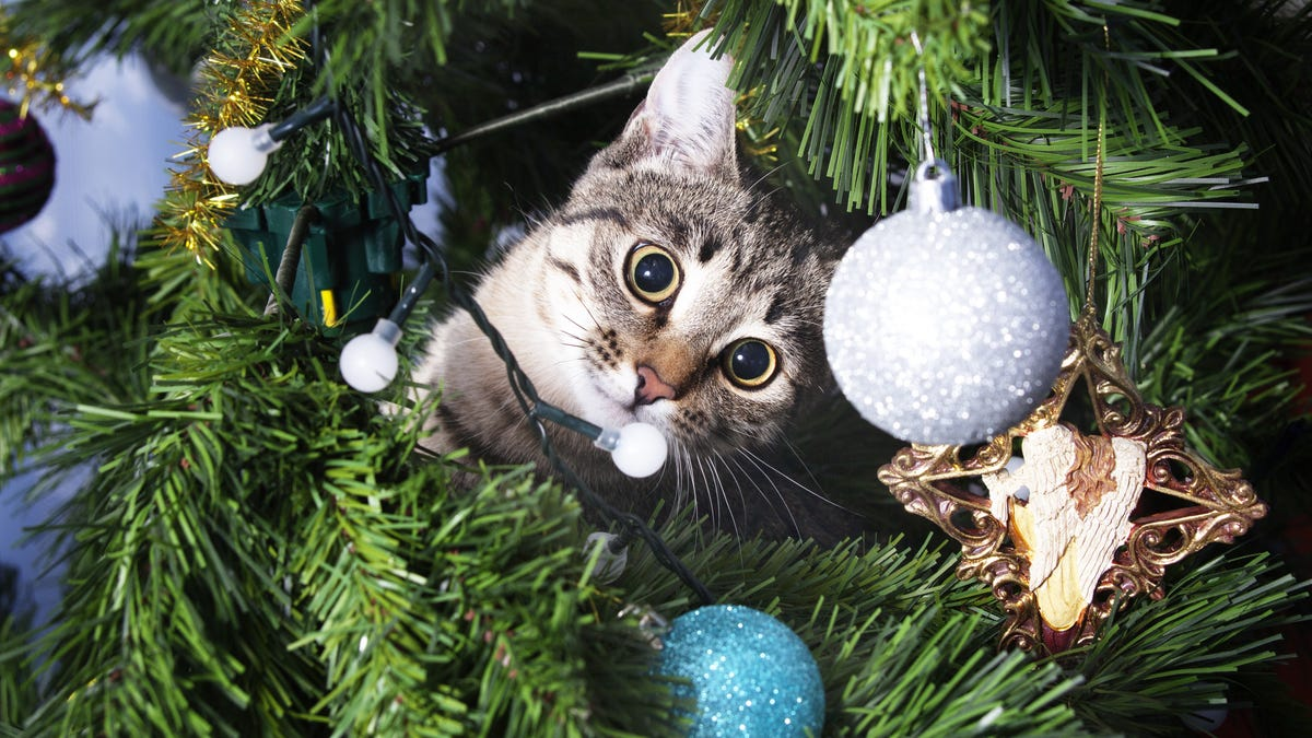 How to Keep a Cat Off a Christmas Tree, According to Reddit