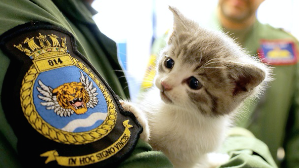 Kitten Survives 300 Miles Inside Car Bumper, Becomes Cover Of Royal Navy Calendar