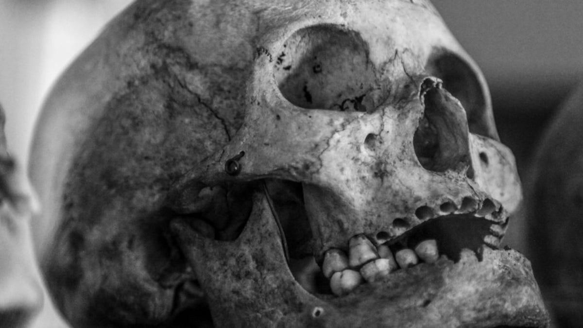 Un time-lapse de 17 meses a un cadáver humano revela que se mueven después de la muerte