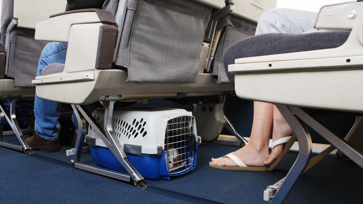 Can You Bring Your Emotional Support Animal on Your Next Flight?