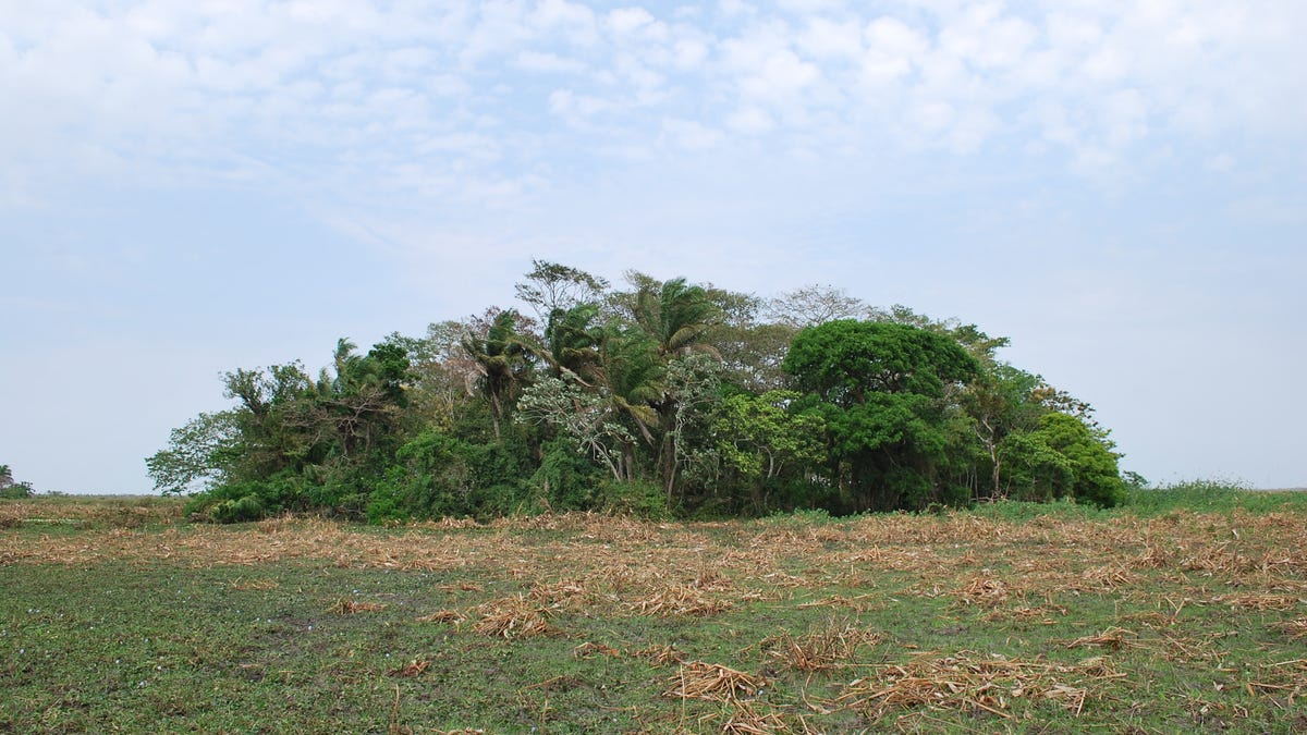 Evidence of 10,000-Year-Old Crops Points to the Amazon as an Early Agricultural Hotspot