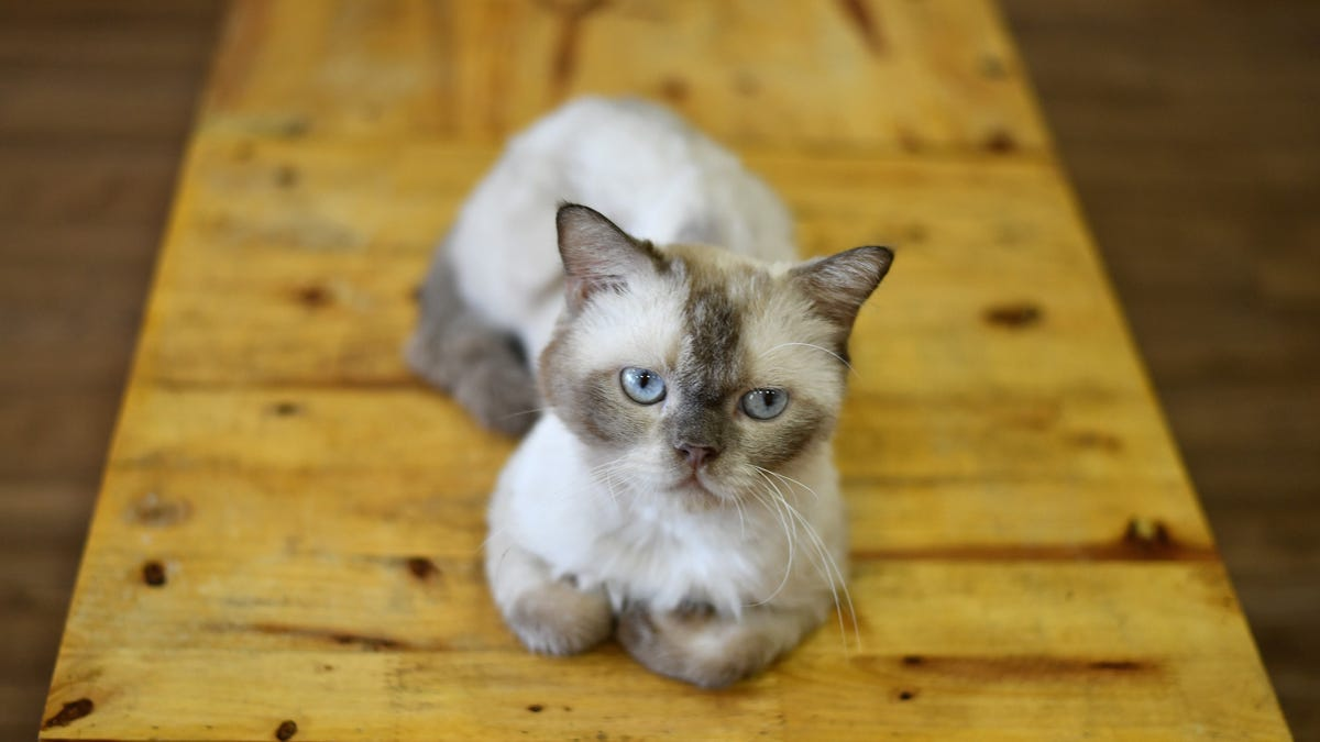Cats Are Just as Disloyal as You Suspected, New Study Suggests