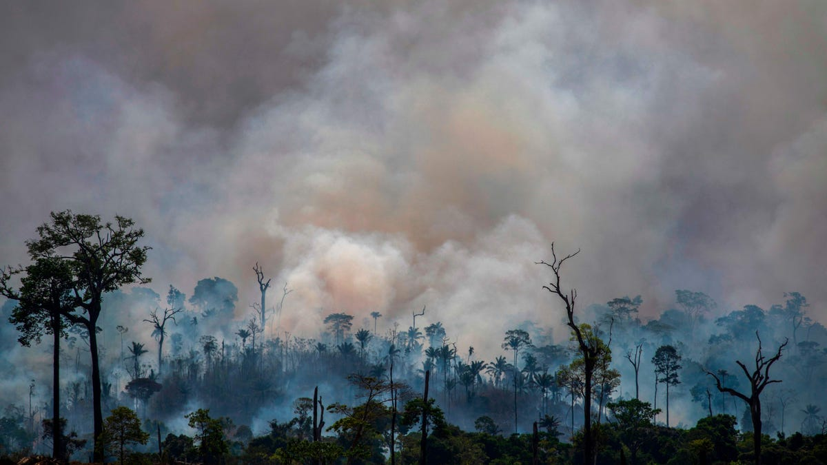Earth's Most Biodiverse Regions Are Collapsing thumbnail