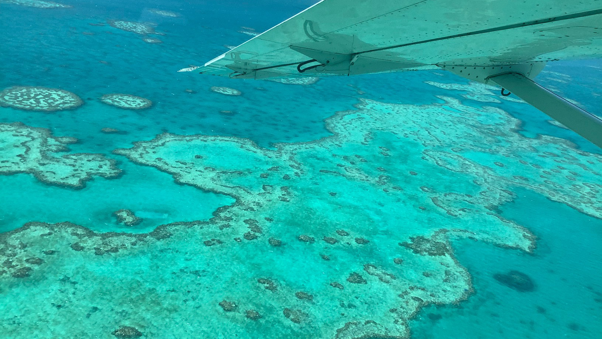 'It's Horrific': Climate Change Is Killing the Great Barrier Reef