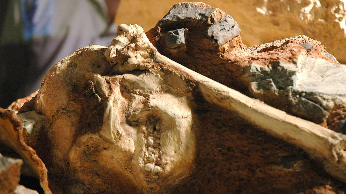 Incredible Fossil Skeleton Reveals an Ancient Human Relative Who Swung Through Trees - Gizmodo