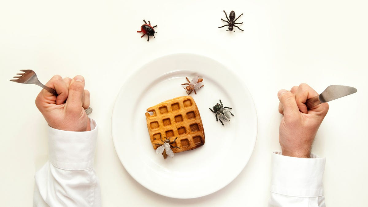 Insect fat tastes just like butter in Belgian waffles