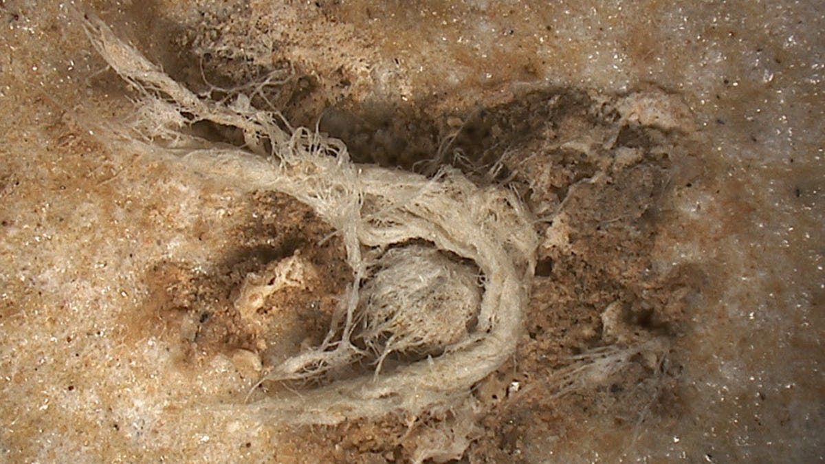 Fascinating Discovery Suggests Neanderthals Invented String - Gizmodo