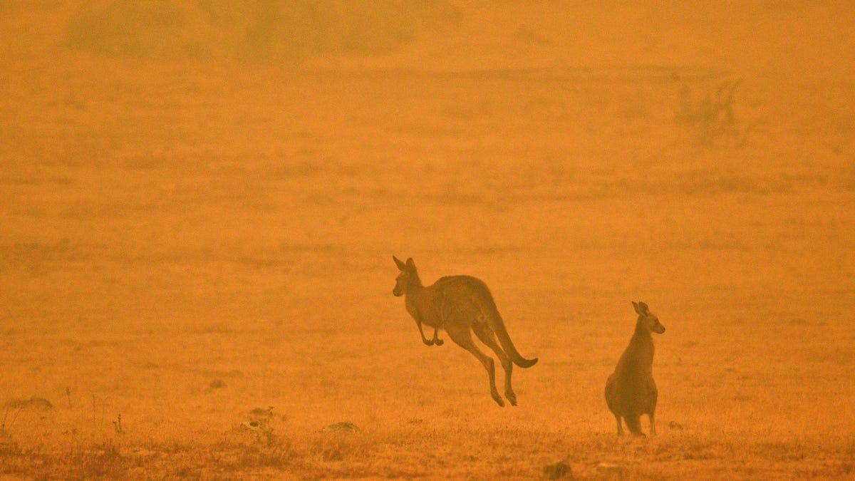 1.250 millones de animales han muerto en los incendios de Australia