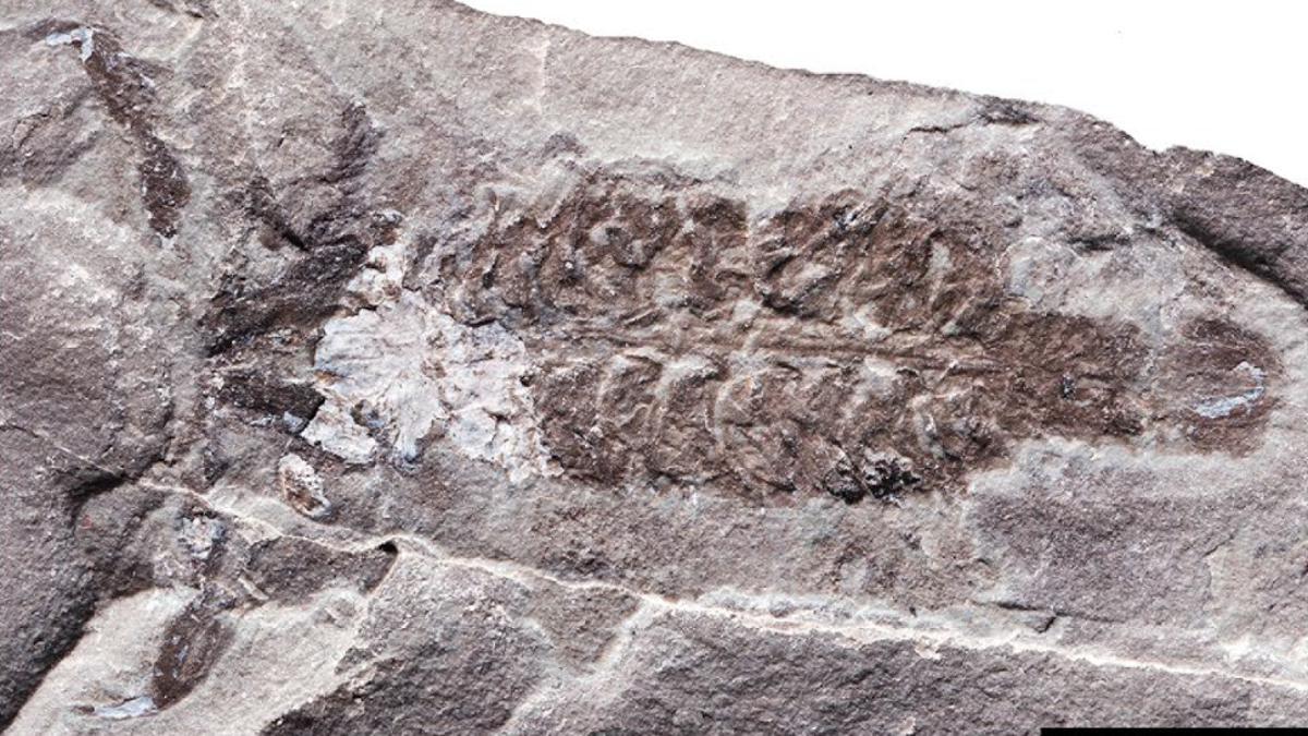 436-Million-Year-Old Scorpion Was Among the Planet's First Air Breathers