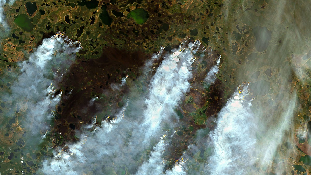 Siberian Fires Have Released a Record Amount of Carbon This Year