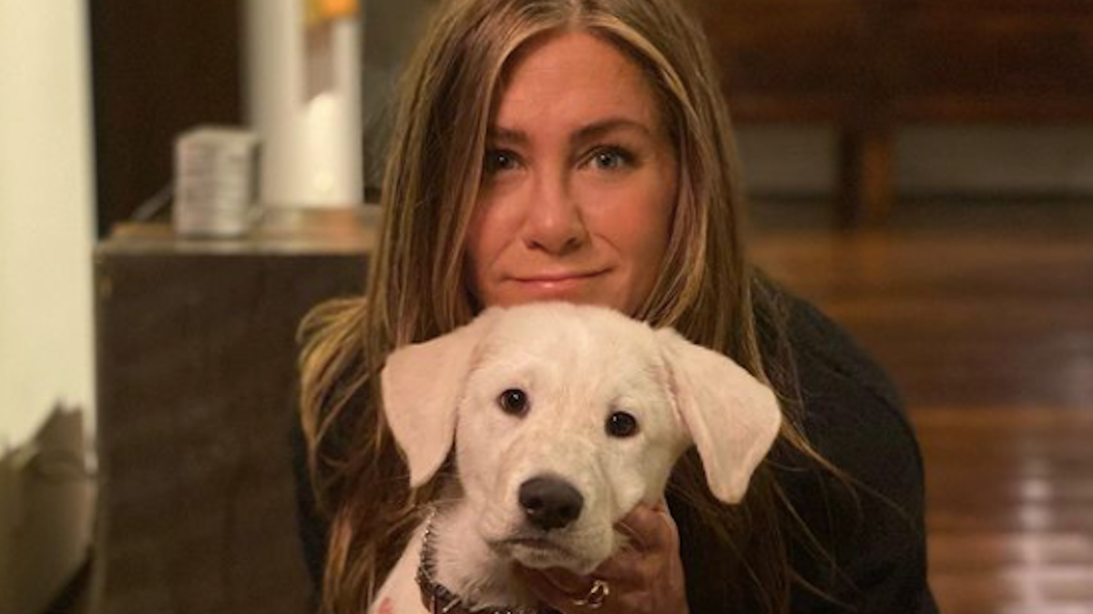 All the Celebrities Who Spent Thanksgiving With Their Dogs