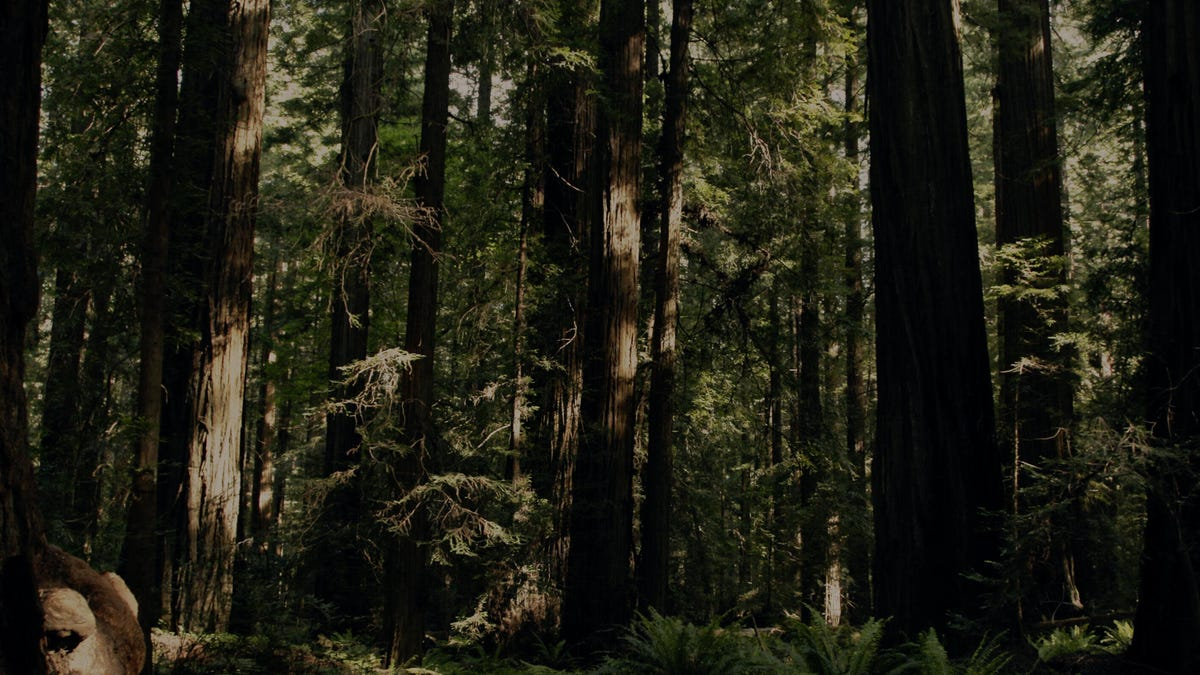 Sasquatch warns viewers to stay out of the woods