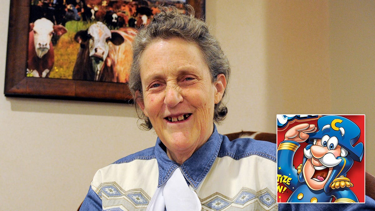 Death With Dignity: Temple Grandin Has Developed A New Mechanical Restraint System For Humanely Slaughtering C