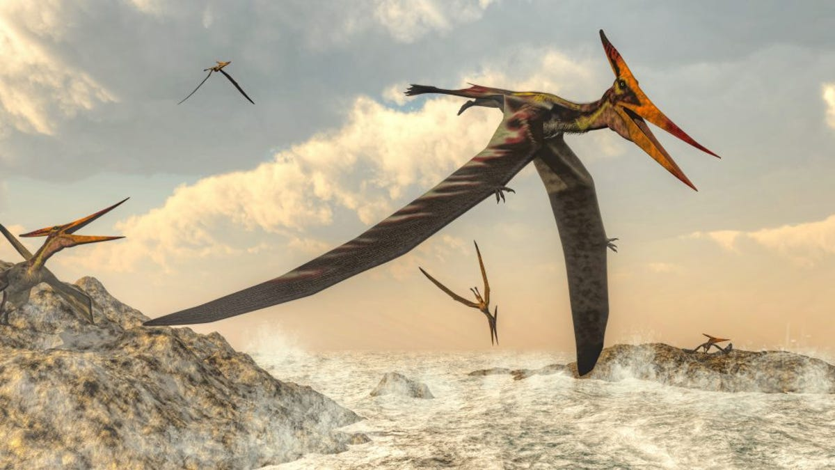 Scientists Uncover the Mysterious Origin of Pterosaurs