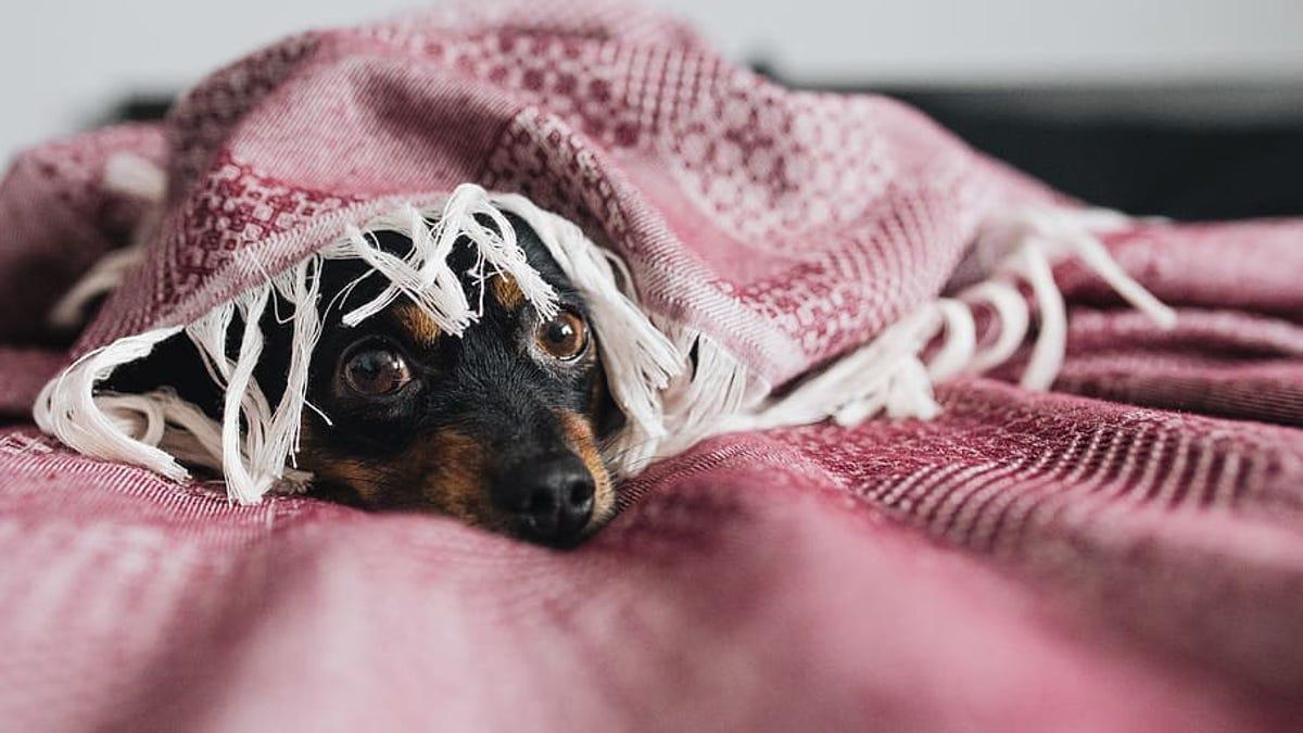 Por qué tu perro tiene pánico a las tormentas eléctricas