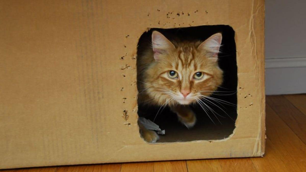 Los científicos salvan al gato de Schrödinger