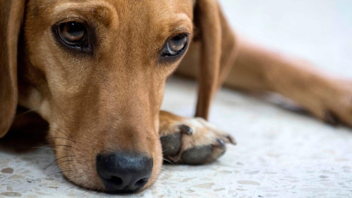 Animal Abuse Including 'Crushing' and 'Burning' Is Now a Federal Felony