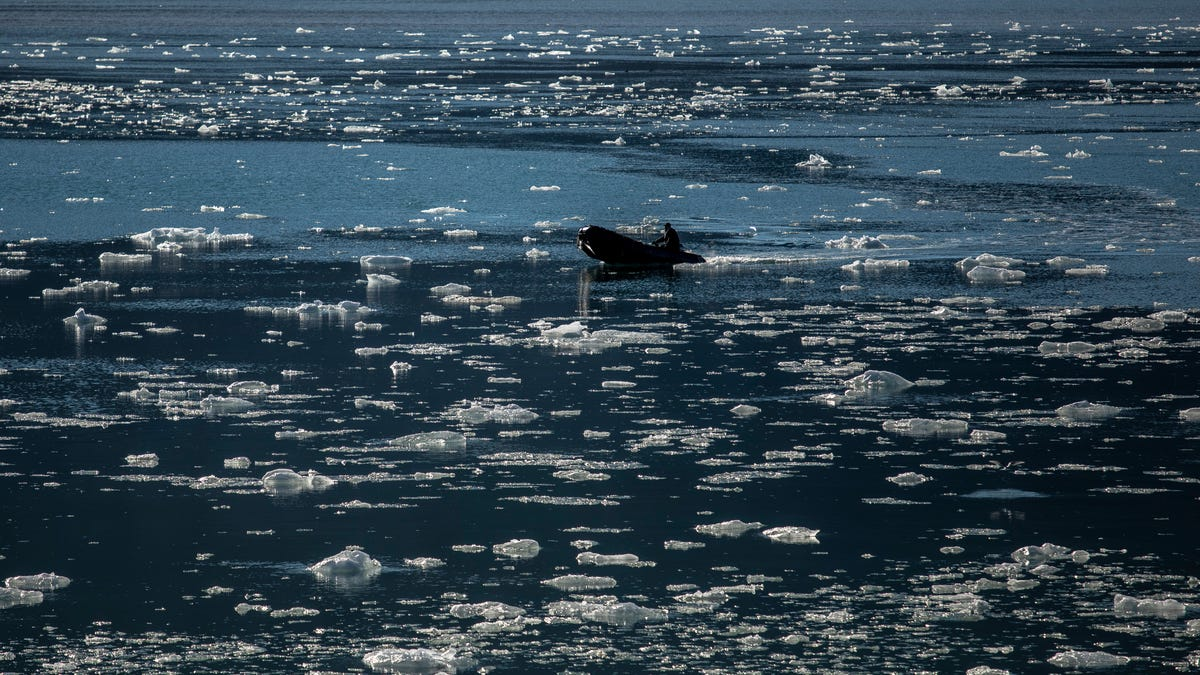 This Year's Arctic Sea Ice Is Failing to Form, Raising a Huge 'Red Flag'