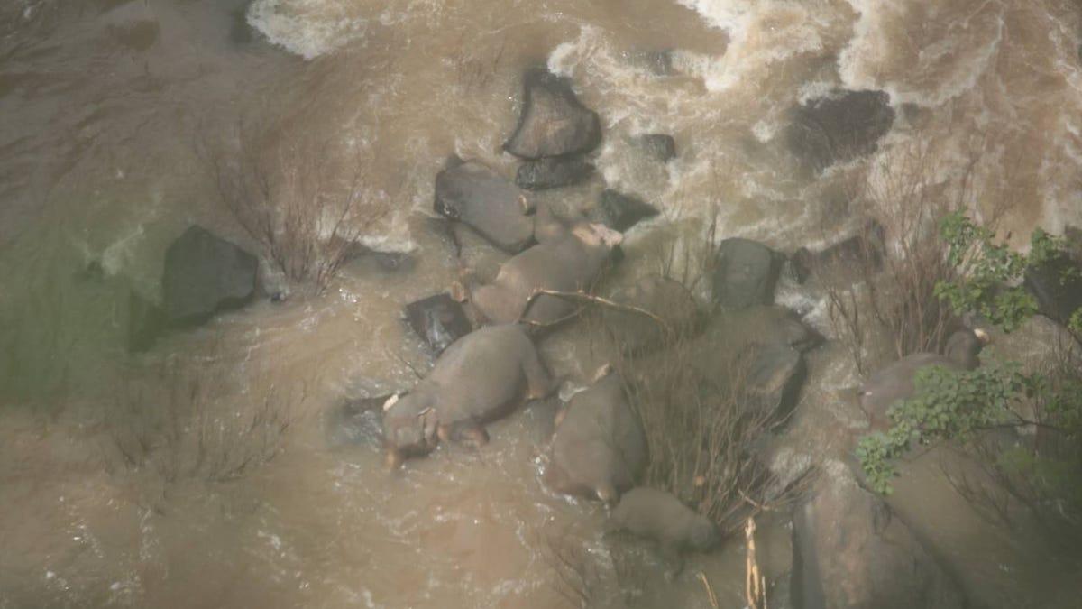 Seis elefantes mueren al caer por una cascada mientras trataban de ayudarse unos a otros