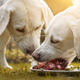 Photo of two yellow labs eating raw meat off a plate outdoors.