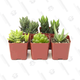 Succulents (5-Pack) | $15 | Amazon Gold Box